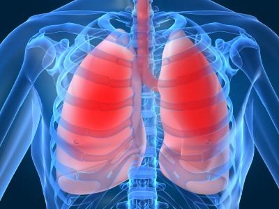 Légzőszervek, allergia